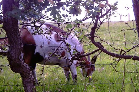 Erholungsgebiet Eselsweg erhalten