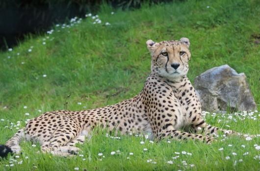 Tierleiden geht weiter – GRÜNE lehnen Tierschutzantrag im Stadtrat ab