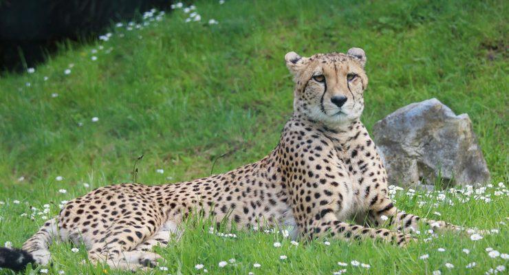 Für mehr Tierschutz in Aachen: Keine Wildtiere im Zirkus