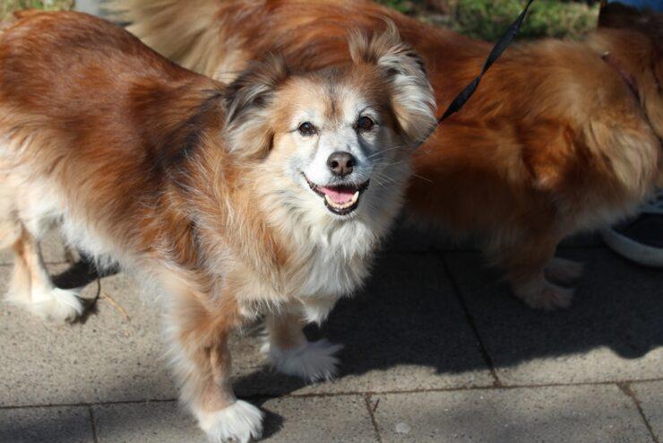 Für ein hundefreundliches Aachen: Mehr Herz für Tiere