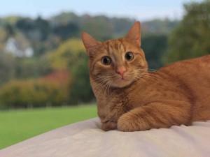 Kastration hilft ein weiteres Anwachsen von verwilderten und leidenden Katzenbeständen zu vermeiden
